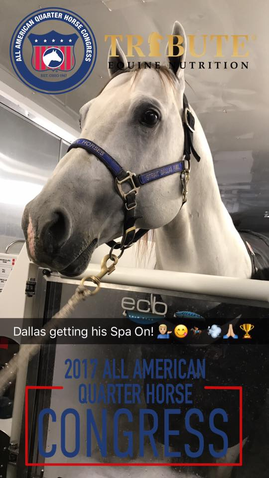 #StraitDallasFuel owned by Lynn Gardner Cicman by #DallasFuel is the 2017 All American Quarter Horse Congress Sr. Barrel Racing Champion out of 195 head with a slip at the third!!