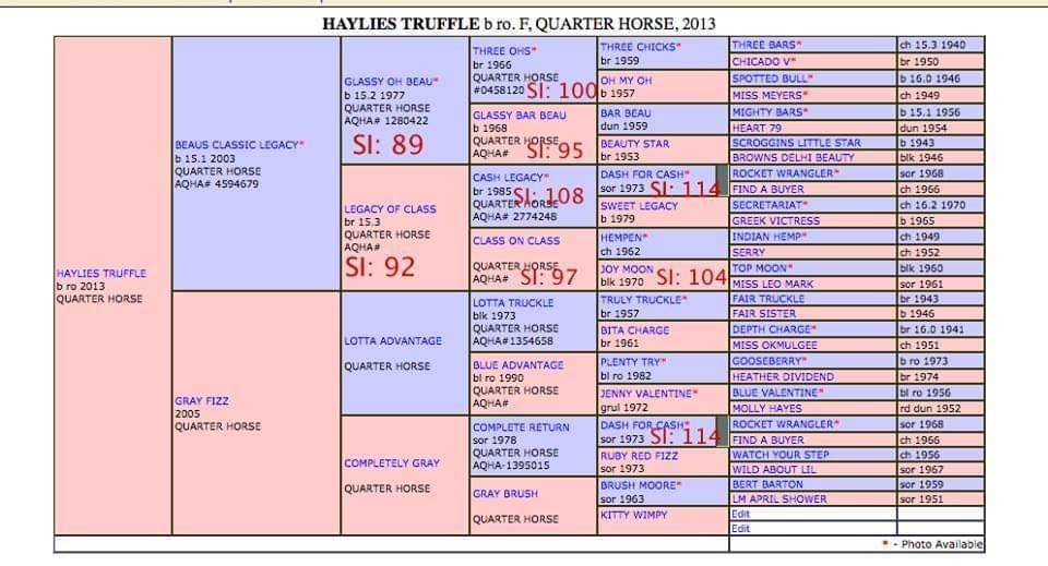 Haylies Truffle