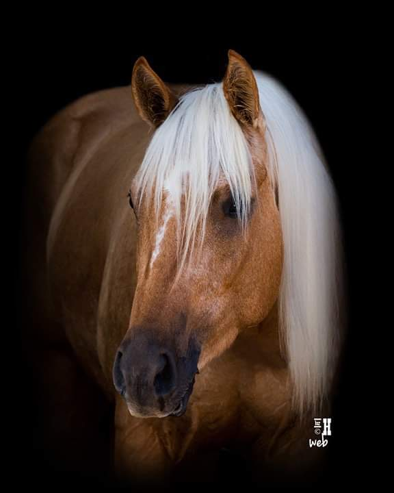 Thank you Paige for sending the beautiful headshot of Tator.