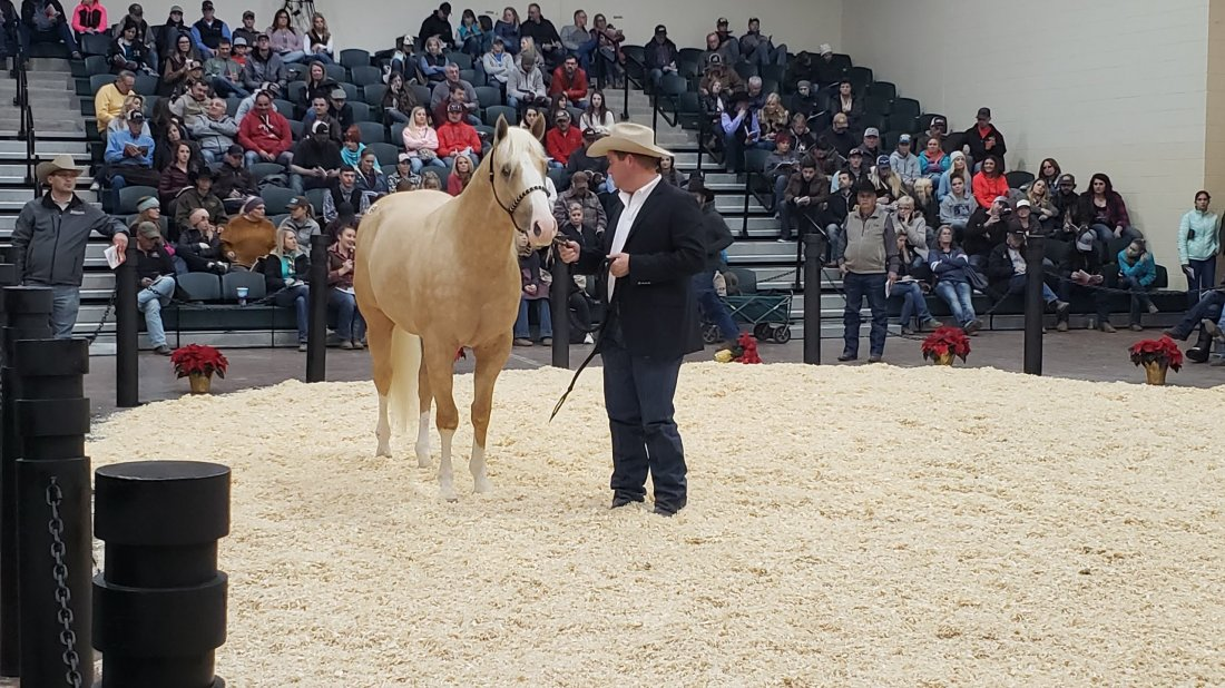 SOLD!! Congratulations to James Rogers of Oklahoma on his purchase of My Heart Of Hearts from the BFA World Championship Barrel Horse Sale!