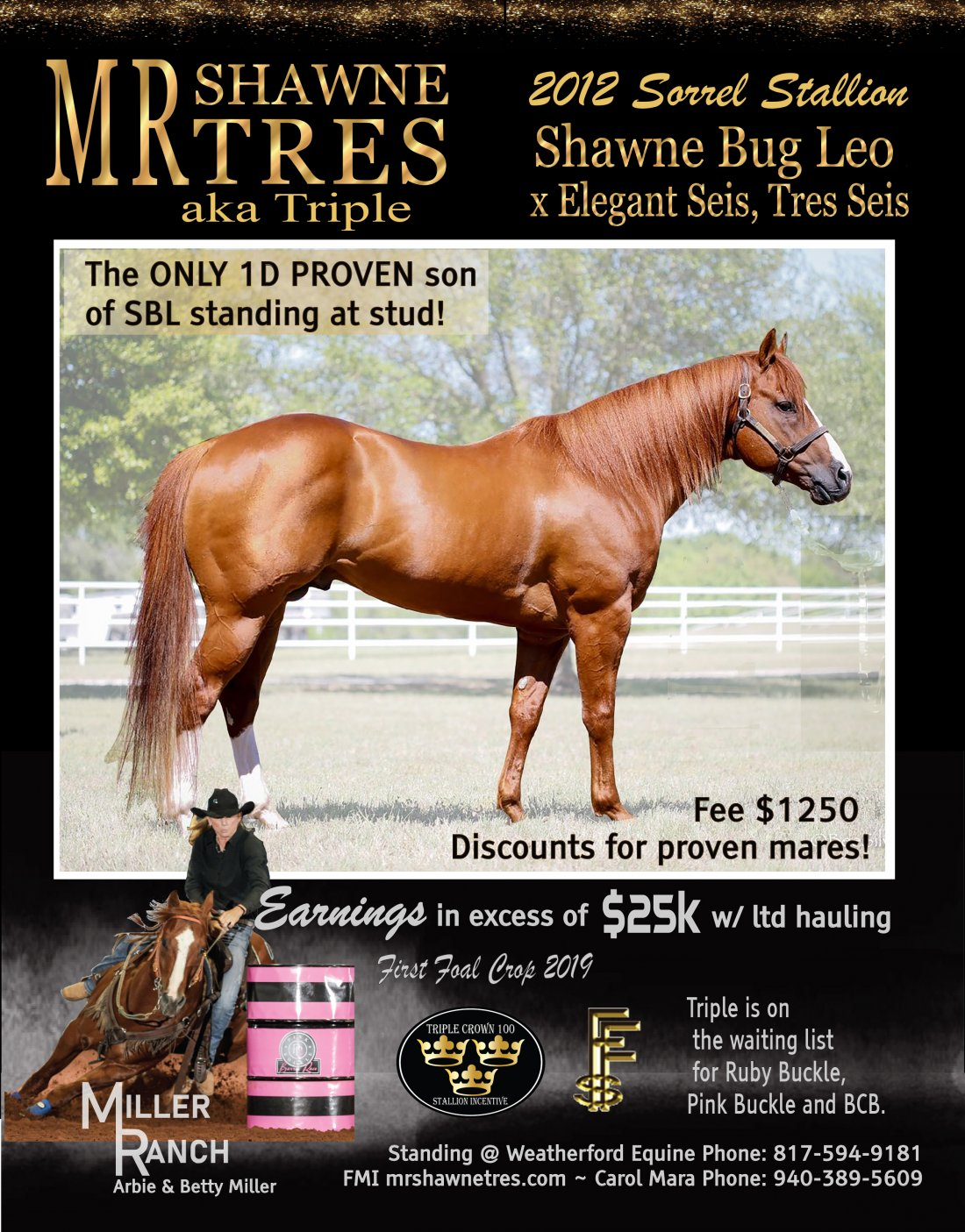 Thank you Cara Mara and Miller Ranch for choosing BHot Market for your stallion flyer design.