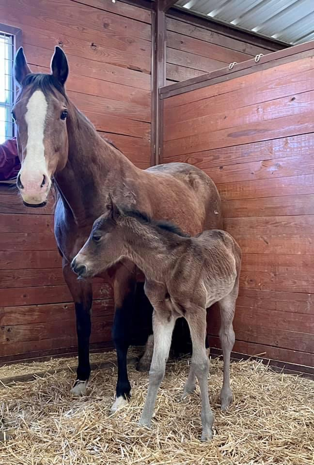 Congratulations Terry Vogel on your NPOM x All Night Corona colt!