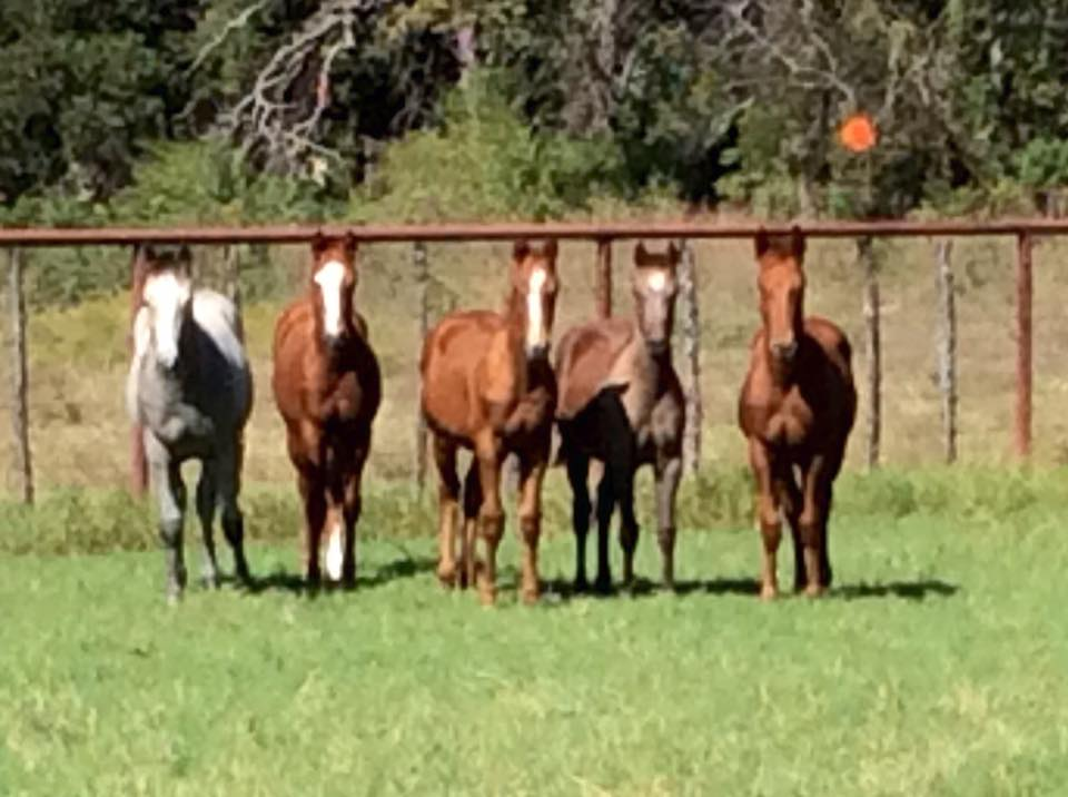No Pressure On Me babies! Here is a photo of our personal foals by Rooster.