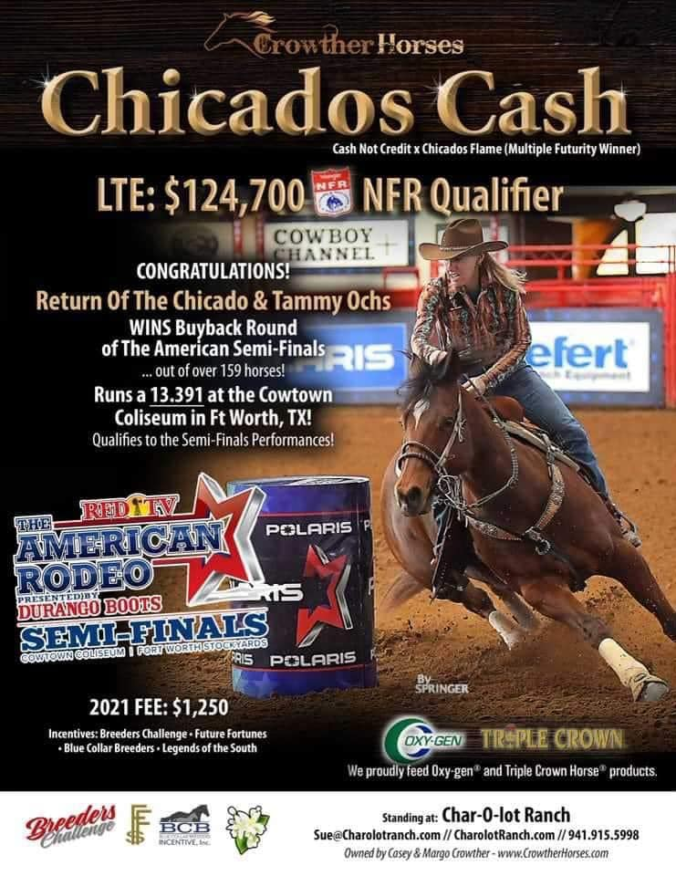 Proud Papa moment for Chicados Cash as the 13 yo bay gelding Return Ofthe Chicado piloted by Tammy Ochs scorches a 13.391 which proves to be the fastest time of The American Semi Finals Long Go and Buy Backs