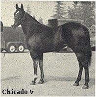 CHICADO V