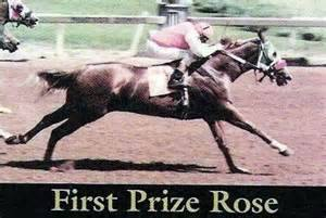 FIRST PRIZE ROSE