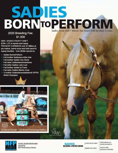 Royal Crown Stallion  Sadies BornToPerform