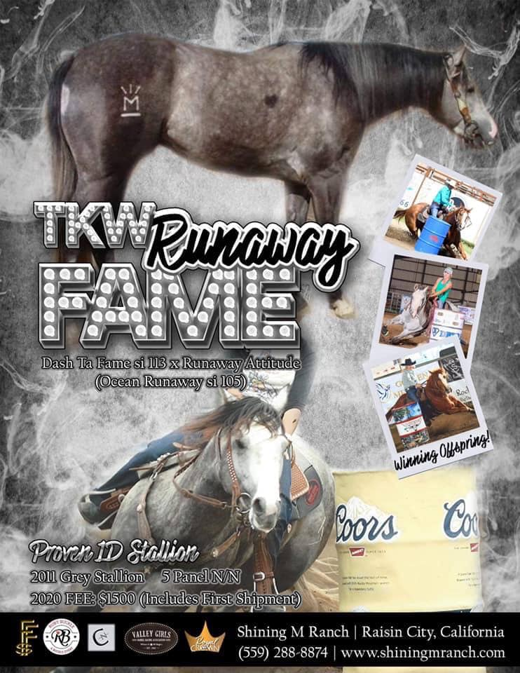 Stallion Spotlight  👑 TKW Runaway Fame 👑